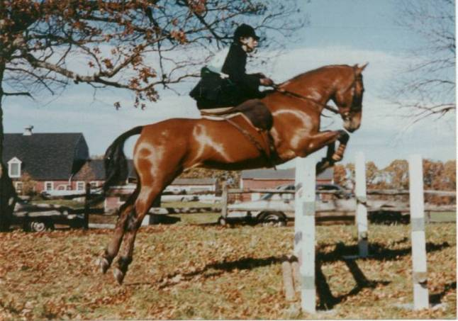 Gail DiScipo riding Oscar Wilde, competing in the New England Hunter Trials at Old North Bridge Hounds.